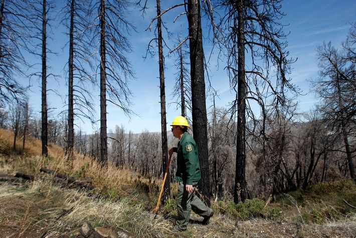 Surrounded by scorched trees, Steve Bear, Station Fire Reforestation Project leader with the U.S. Forest Service, ...