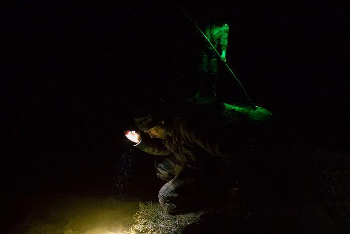 Pescadores de angula