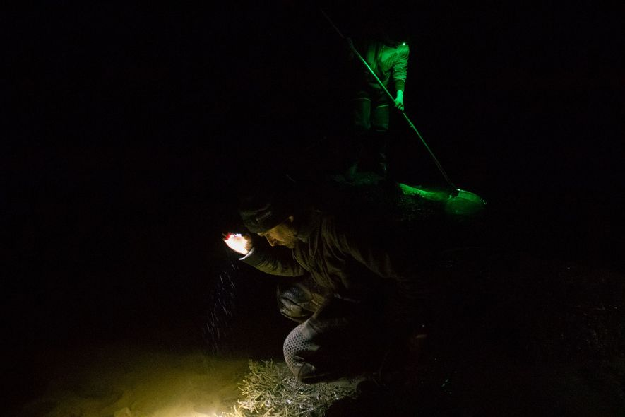 Pescadores de angula trabajan en las orillas rocosas por la noche hasta alcanzar sus cupos anuales individuales.