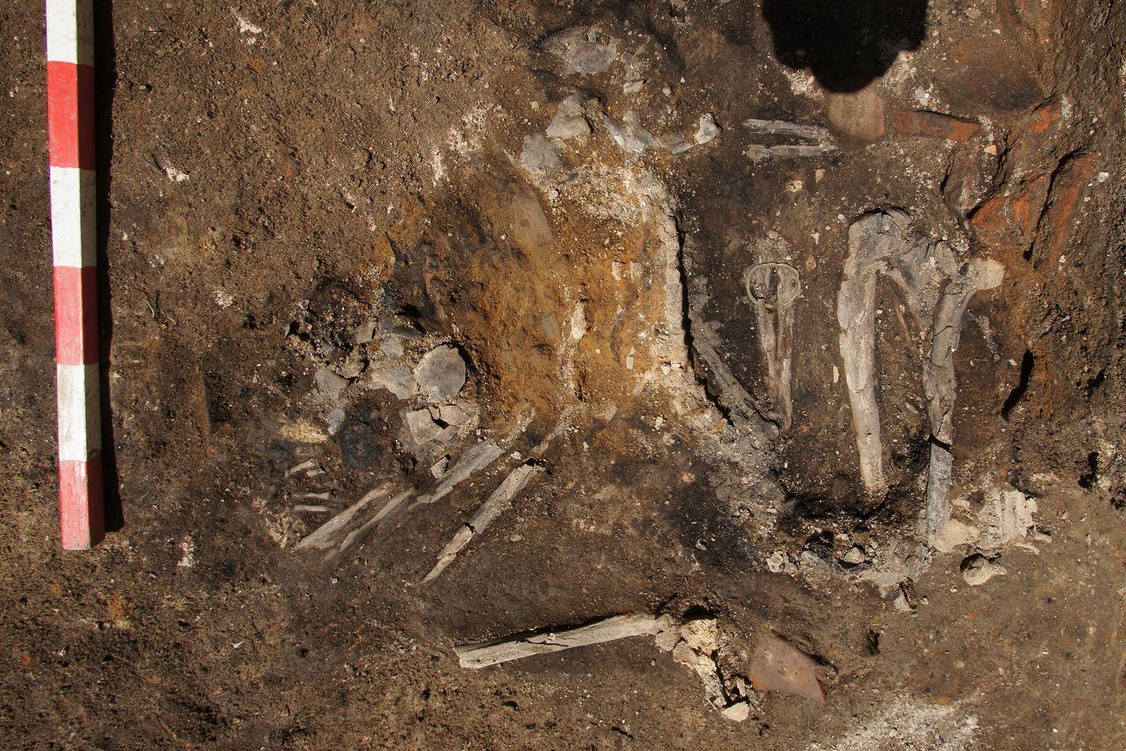Esqueleto de una mujer adulta