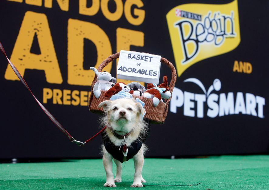 La National Retail Federation estadounidense espera muchos disfraces de mascotas este año, entre ellos perritos calientes, leones y calabazas.