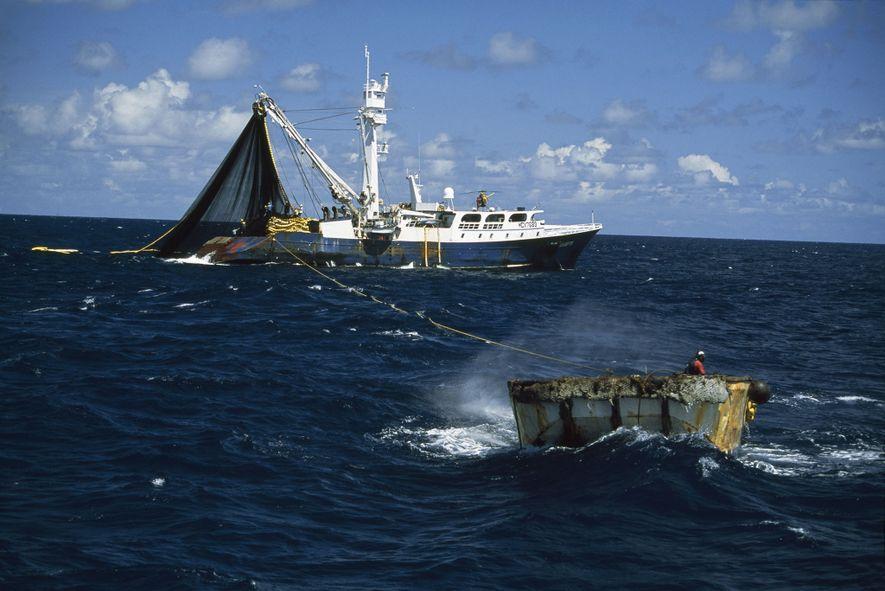 Este barco pesca atunes, una especie que se suele pescar en alta mar.