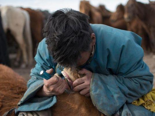 Los caballos tenían dentistas hace 3.000 años