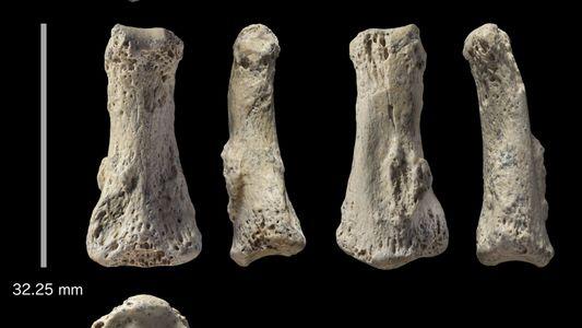 Descubierto el fósil de un dedo humano de 88.000 años en Arabia Saudí