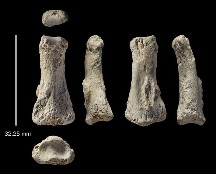 Fósil de dedo humano