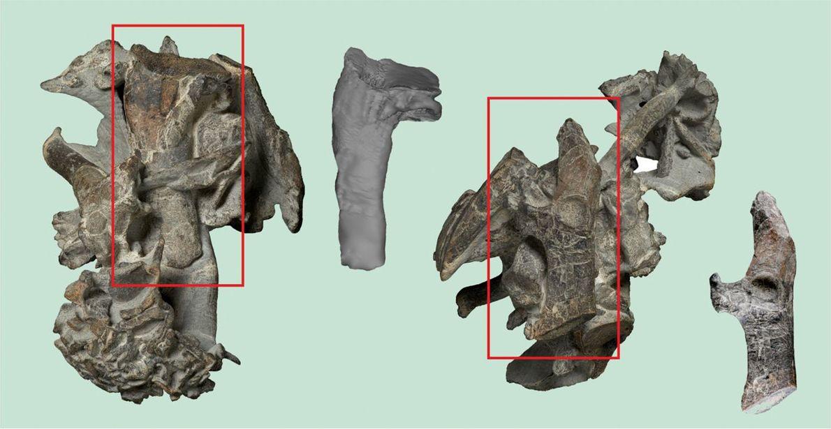 Fósiles de pingüinos gigantes