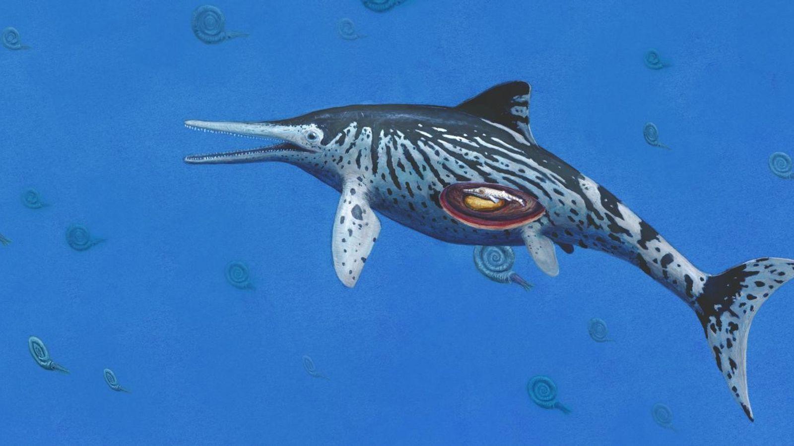 Ictiosaurio embarazada