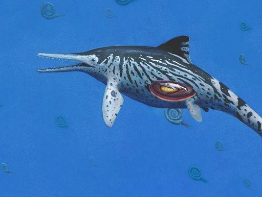 Encuentran en un museo el fósil de un enorme dragón marino