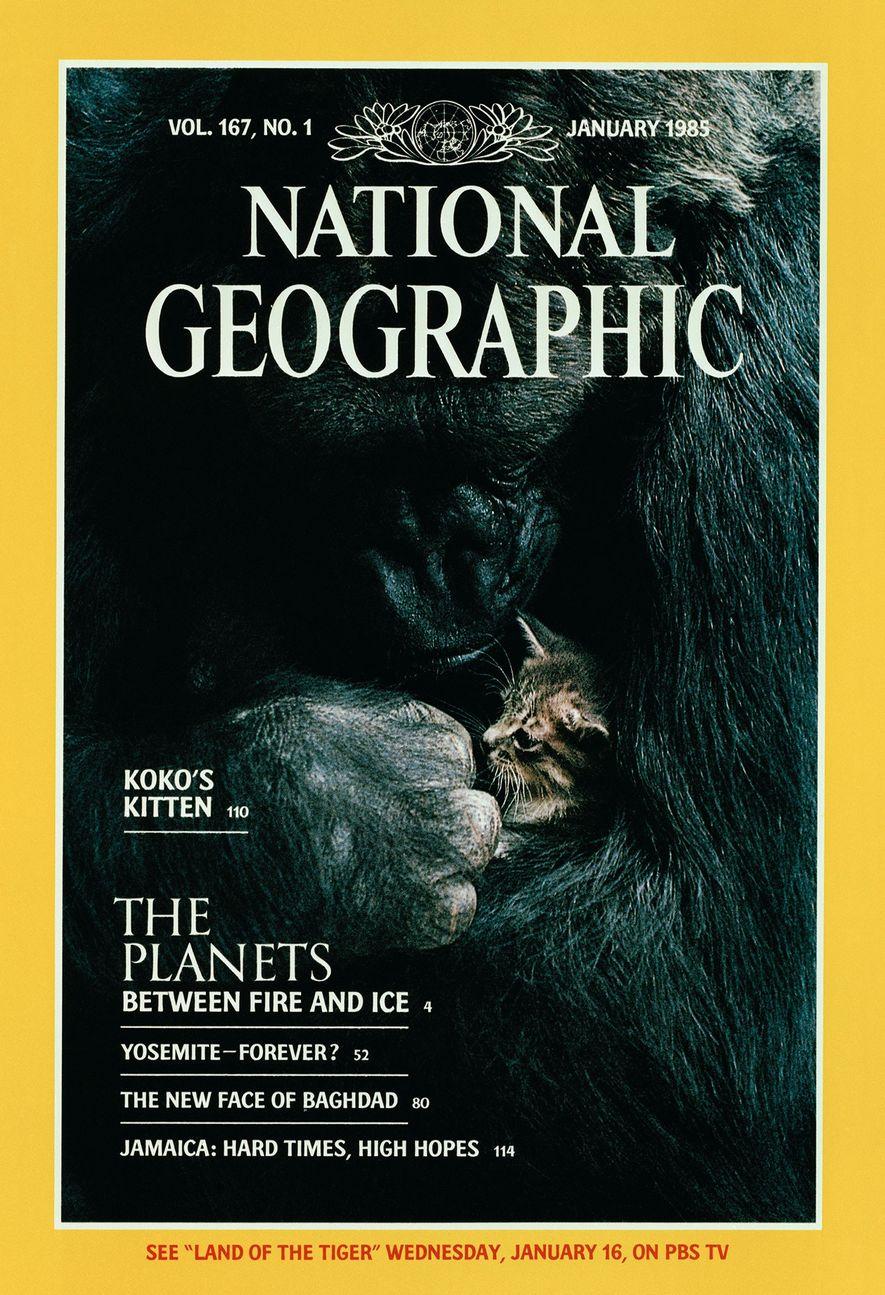 Fallece Koko, la gorila que se comunicaba mediante lenguaje de signos