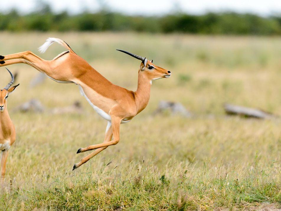 Fotografías de animales saltando