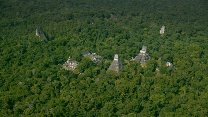 Cubierta forestal