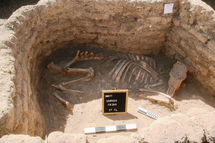 Imagen de la tumba de una vaca o toro