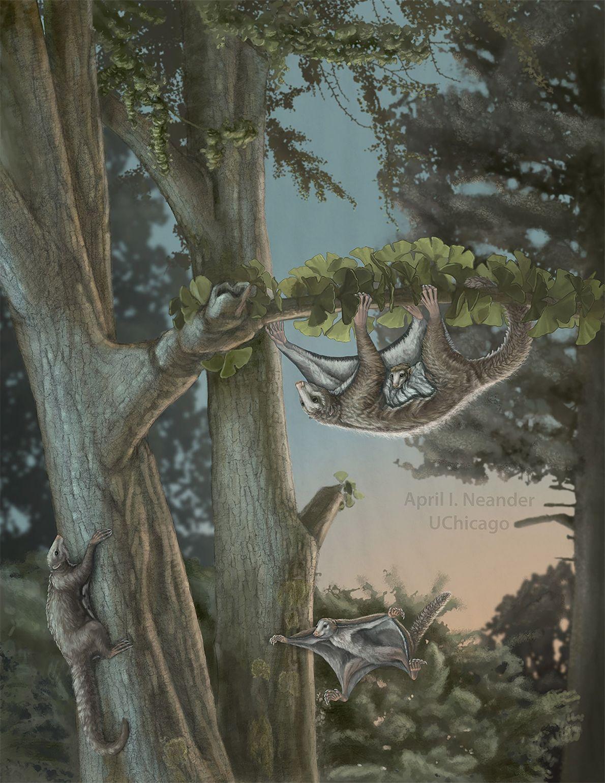 Ilustración del Maiopatagium