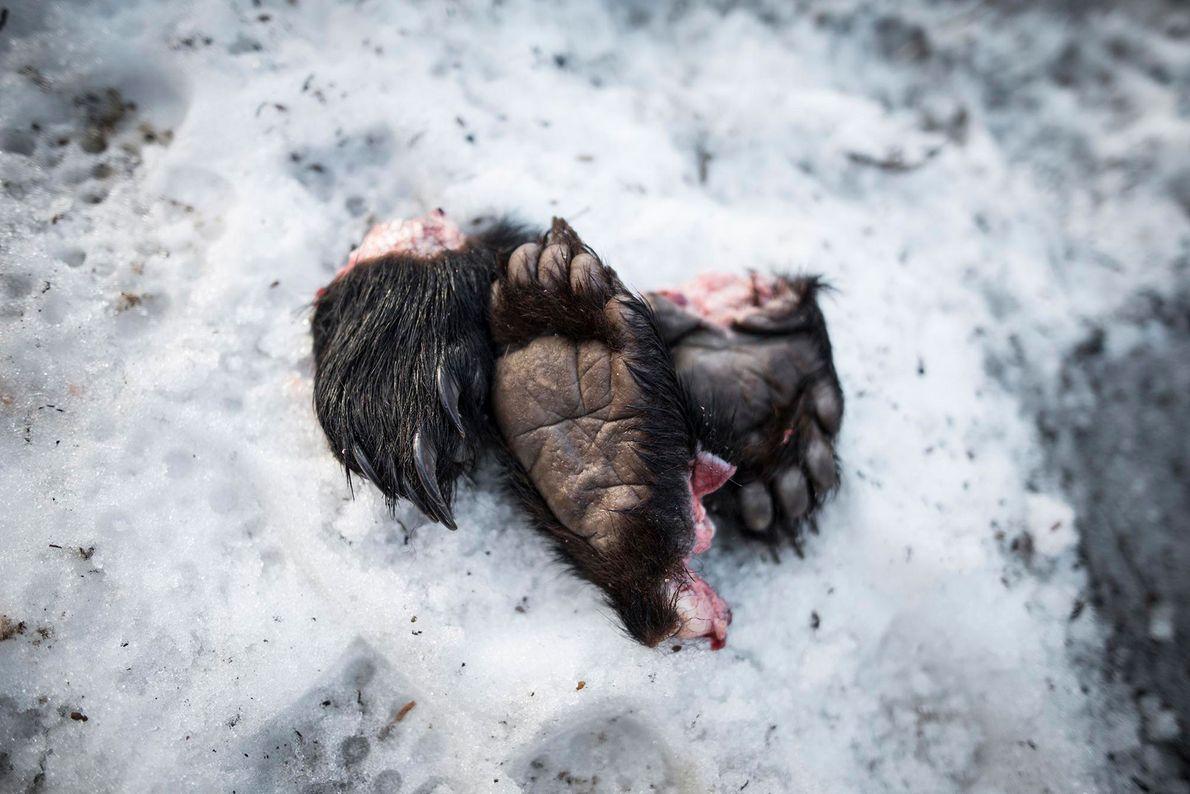 Zarpas de oso