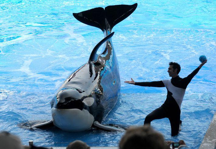La orca Kayla