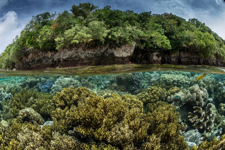 En una expedición de Pristine Seas a Palaos, el equipo descubrió que tanto la tierra como ...