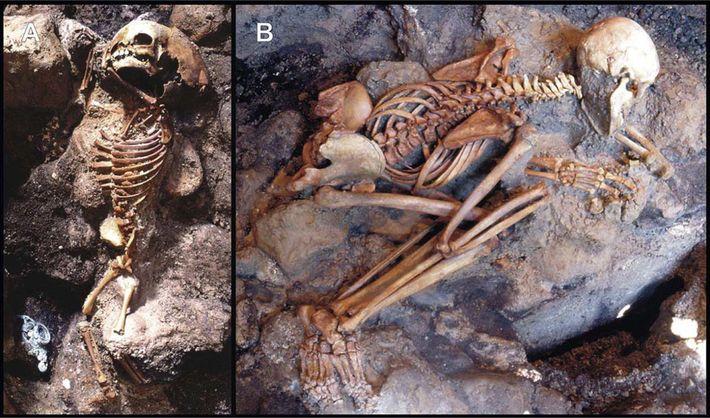 Esqueletos de un niño y un adulto