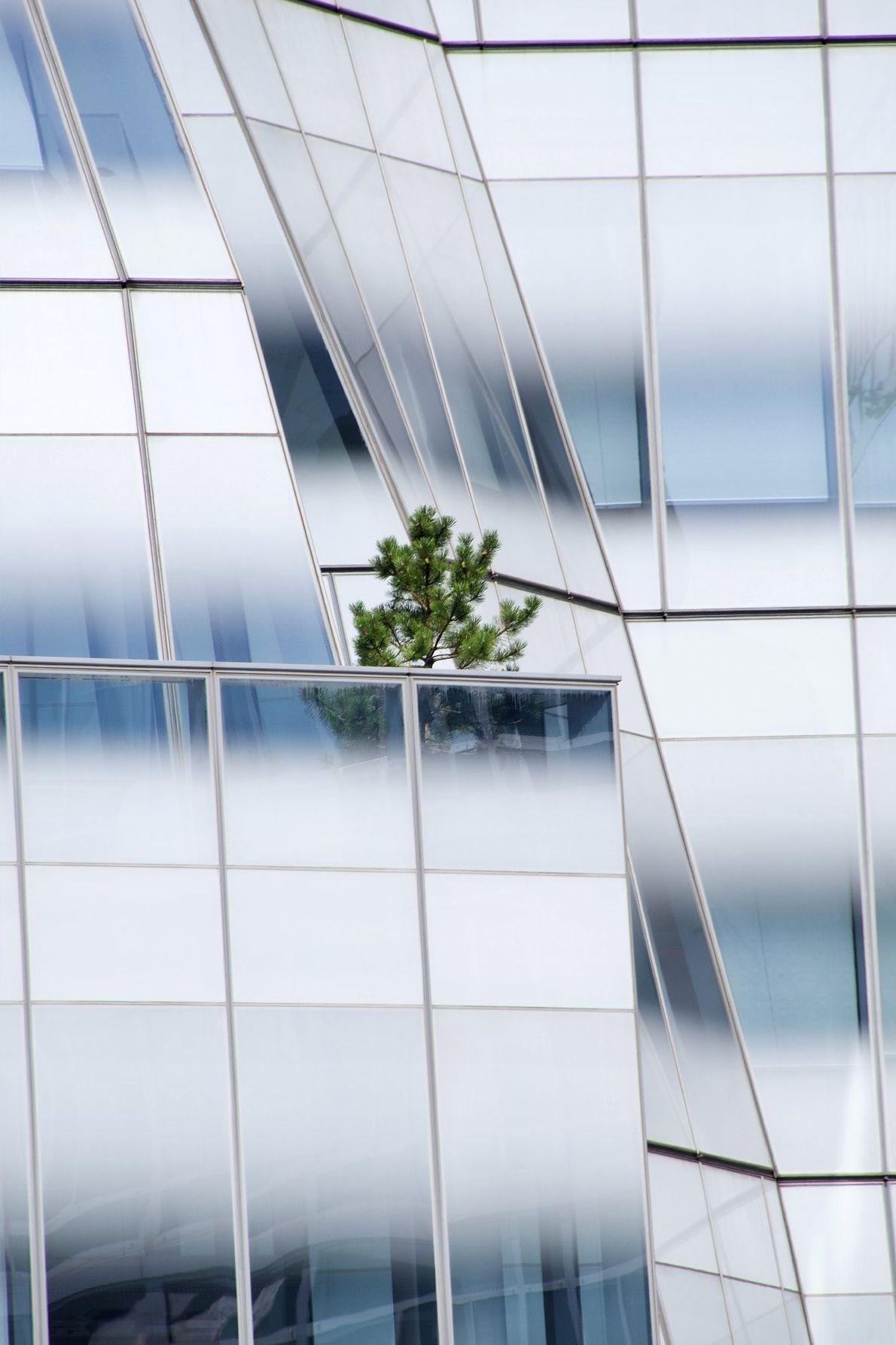 Árbol en un balcón