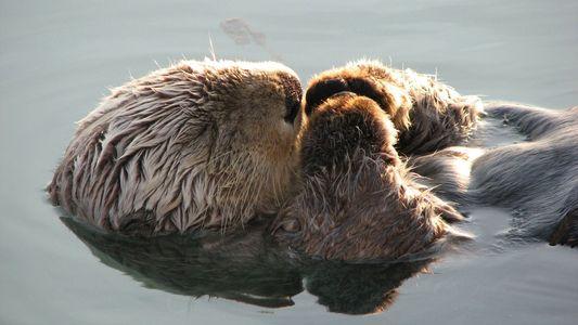 Animales disfrutando de la siesta