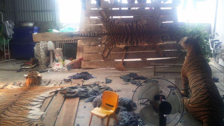 Los investigadores encubiertos de la Wildlife Justice Commission visitaron una casa en Vietnam donde había ocho ...