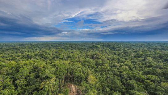Imagen de una larga cabaña de tejado de paja en la selva amazónica vista desde arriba. ...