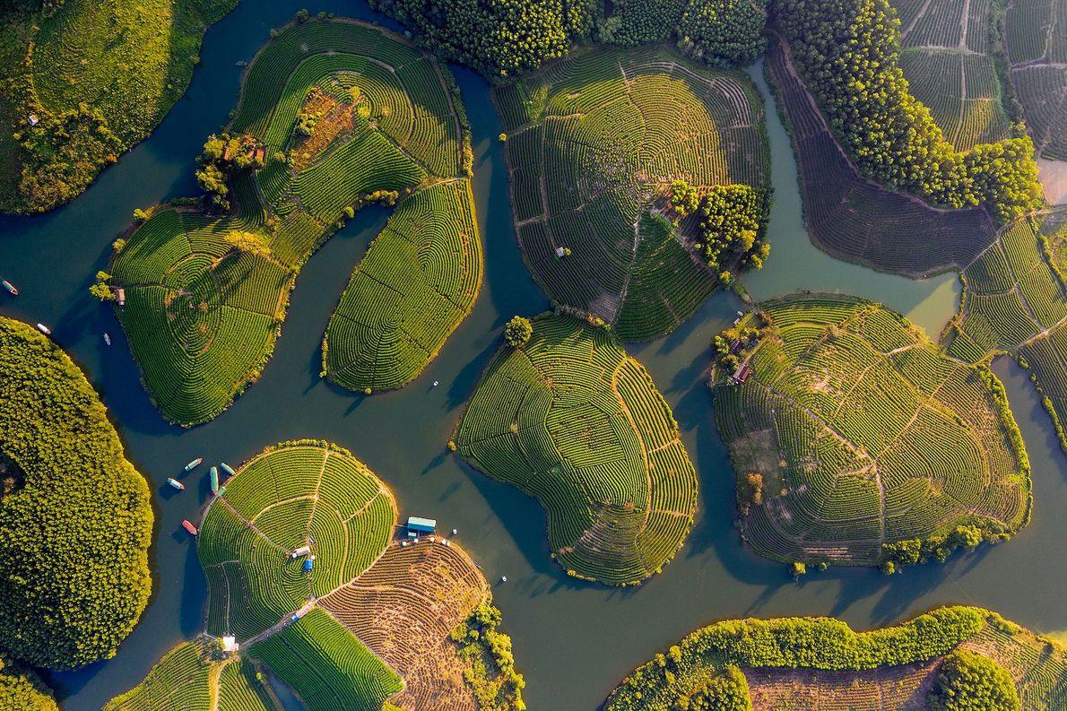 Islas de té verde