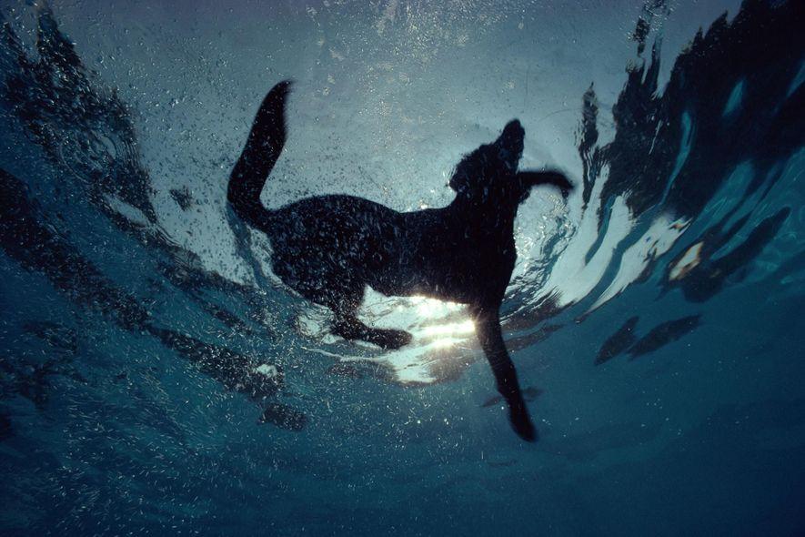 Mantener a tu perro activo