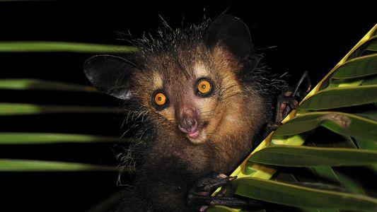 Las seis criaturas más fantasmagóricas del reino animal