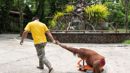 Acusan a cientos de zoos y acuarios de maltratar animales
