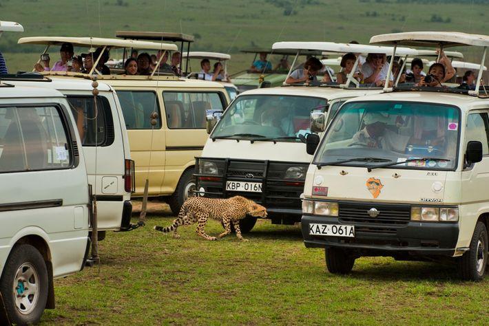 Reserva nacional de Masái Mara