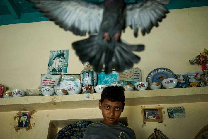 Un niño juega con una paloma
