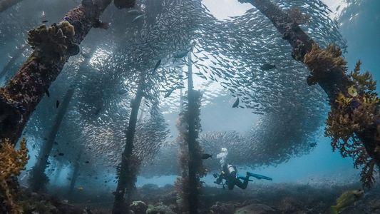 Las mejores imágenes de Indonesia