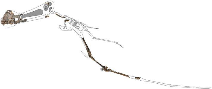 Esqueleto del Ferrodraco