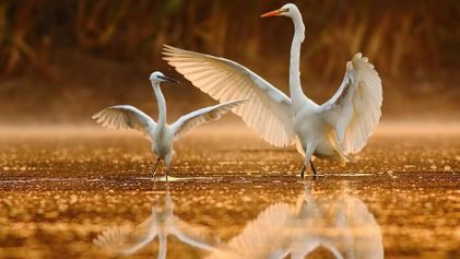 Echa a volar con estas fotografías de aves del mundo
