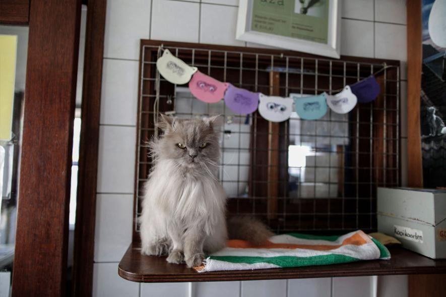 Kasumi espera a que un voluntario le peine el pelo.