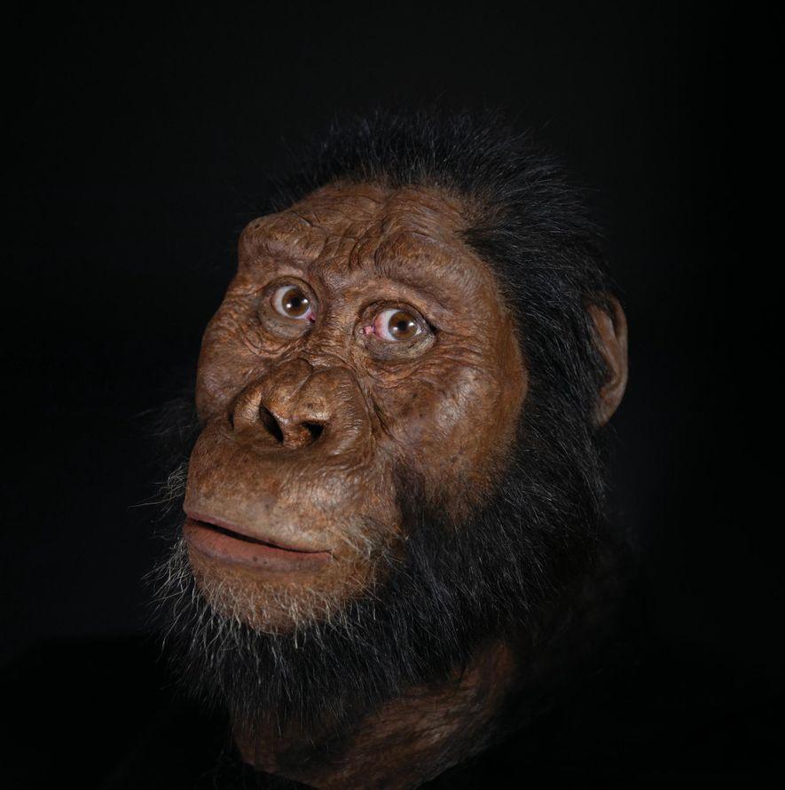 El paleoartista John Gurche reconstruyó el rostro del A. anamensis a partir de escáneres del nuevo cráneo.