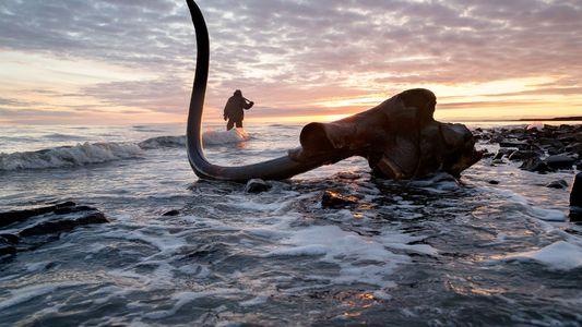 El mamut lanudo