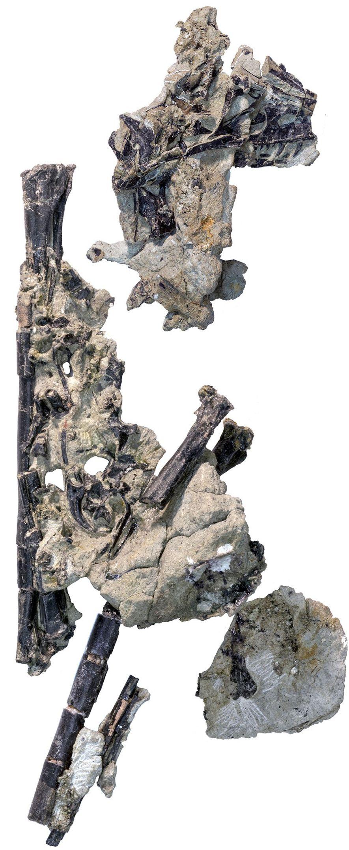 Hesperornithoides miessleri