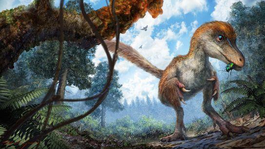 Celurosaurio