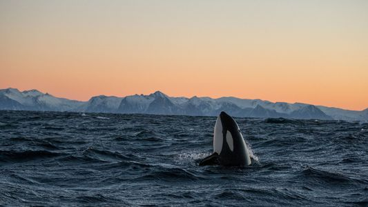 Imágenes de orcas