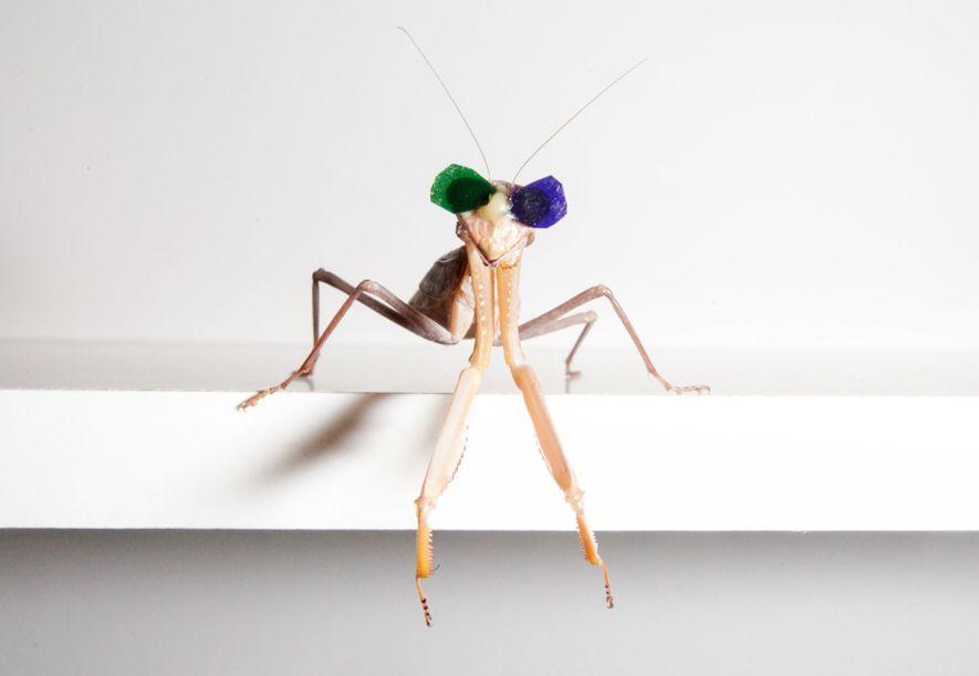 En los experimentos, las mantis observaban una serie de discos en movimiento que se parecían mucho a los movimientos de sus presas.