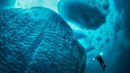11 fotografías que muestran el increíble mundo submarino