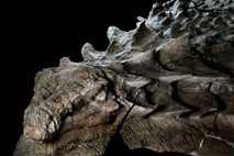 Nodosaurio