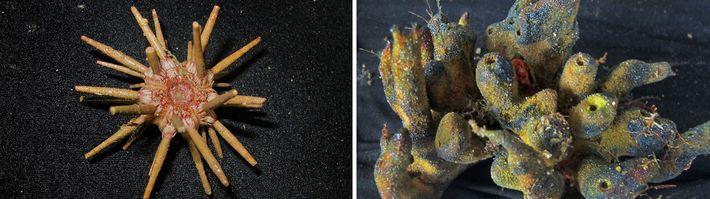 03-amazonas-coral-descubrimiento