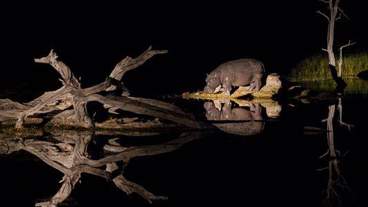La vida nocturna de los animales