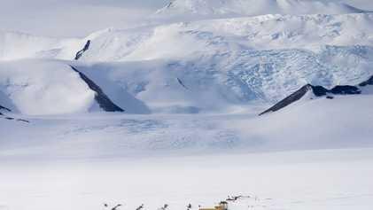 Las especies invasoras amenazan la Antártida por el cambio climático