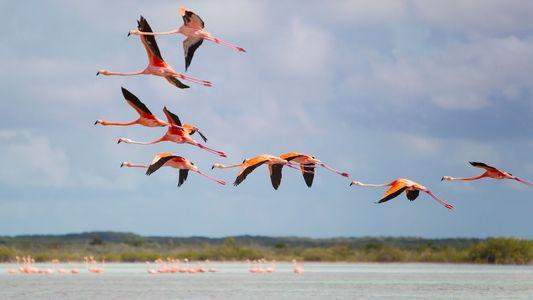 La reciente oleada de huracanes también ha afectado a las aves del Caribe