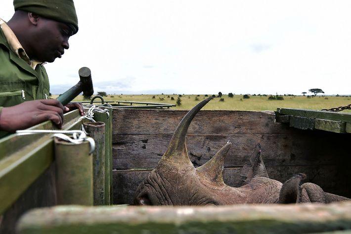 Oficial del Servicio de Vida Silvestre de Kenia