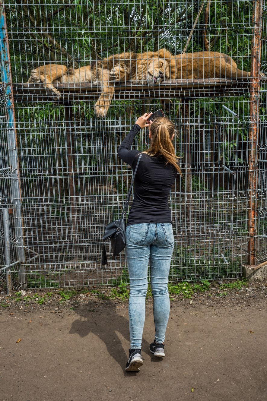 Zoo de Lituania
