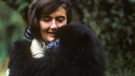 La vida de Dian Fossey, una científica dedicada a los gorilas